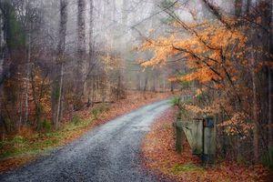 Misty Fall Day in Reedy Park, Charlotte, North Carolina