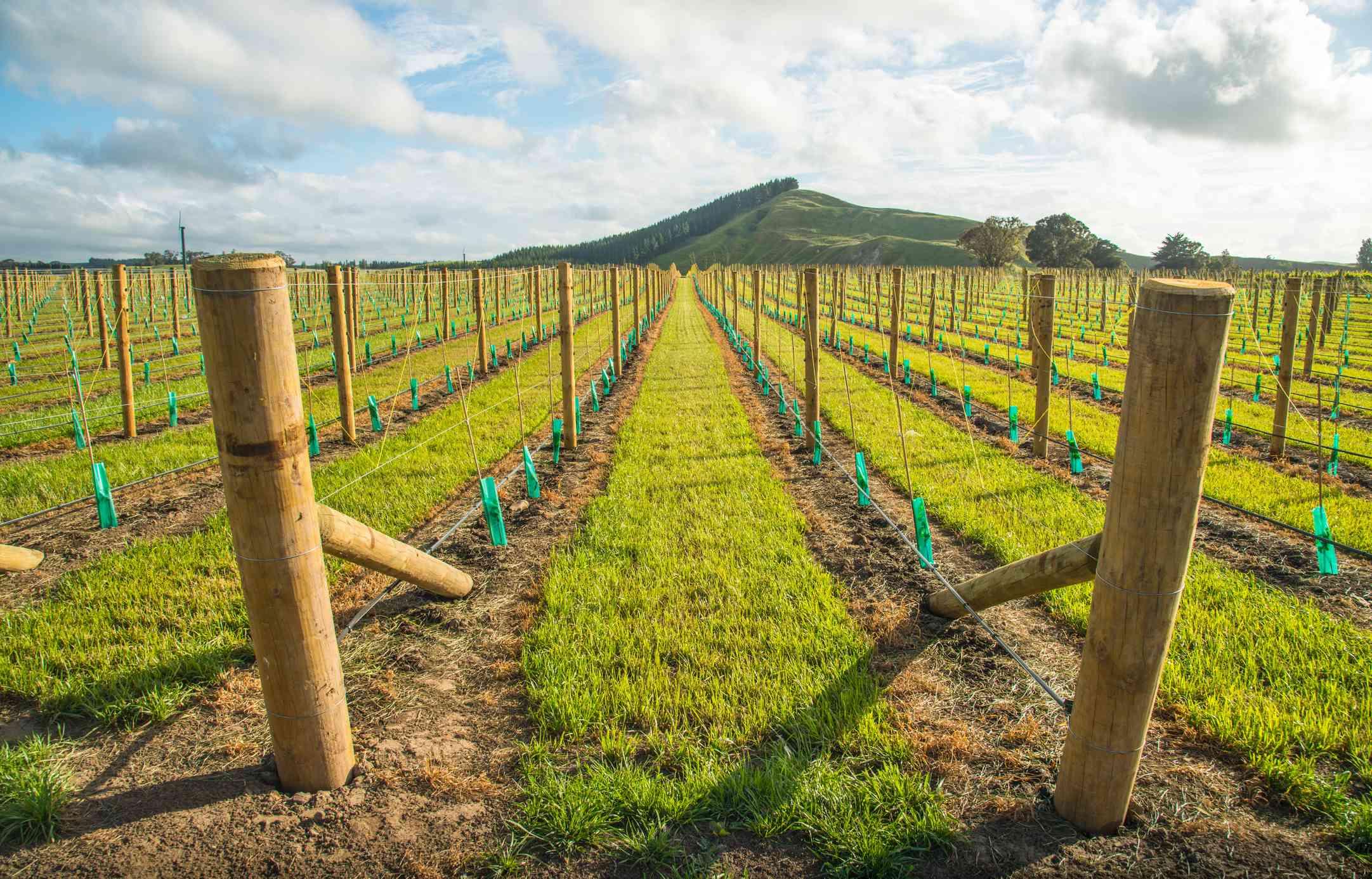 Vineyards of Hawke's Bay