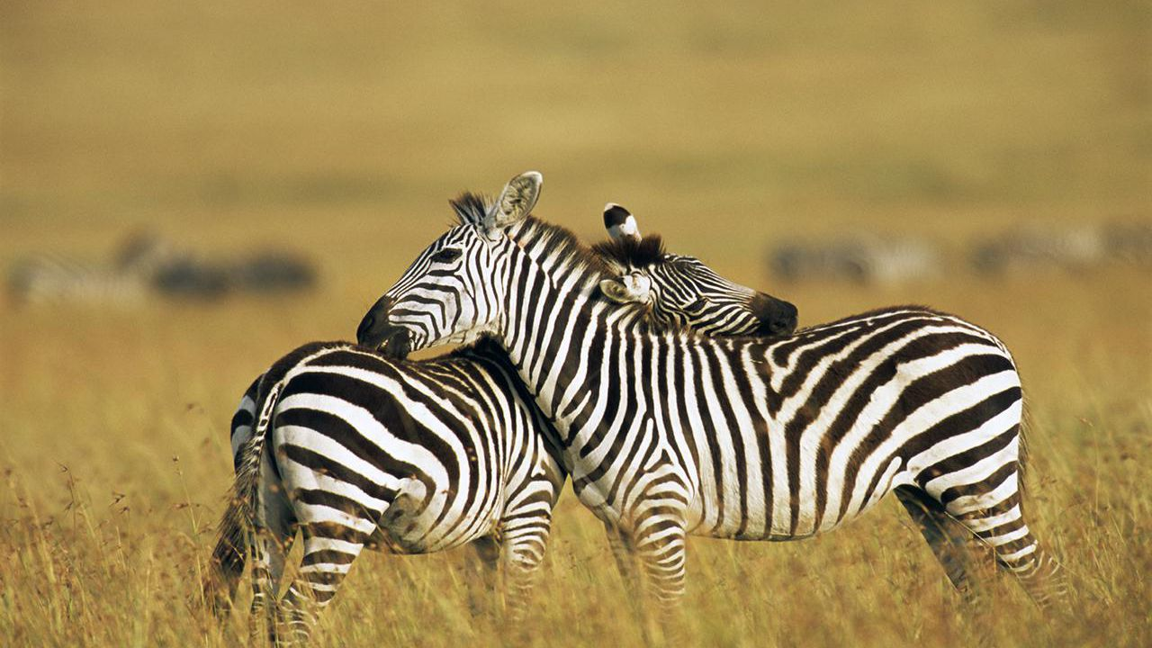 Learn About the Masai Mara Animal Reserve in Kenya