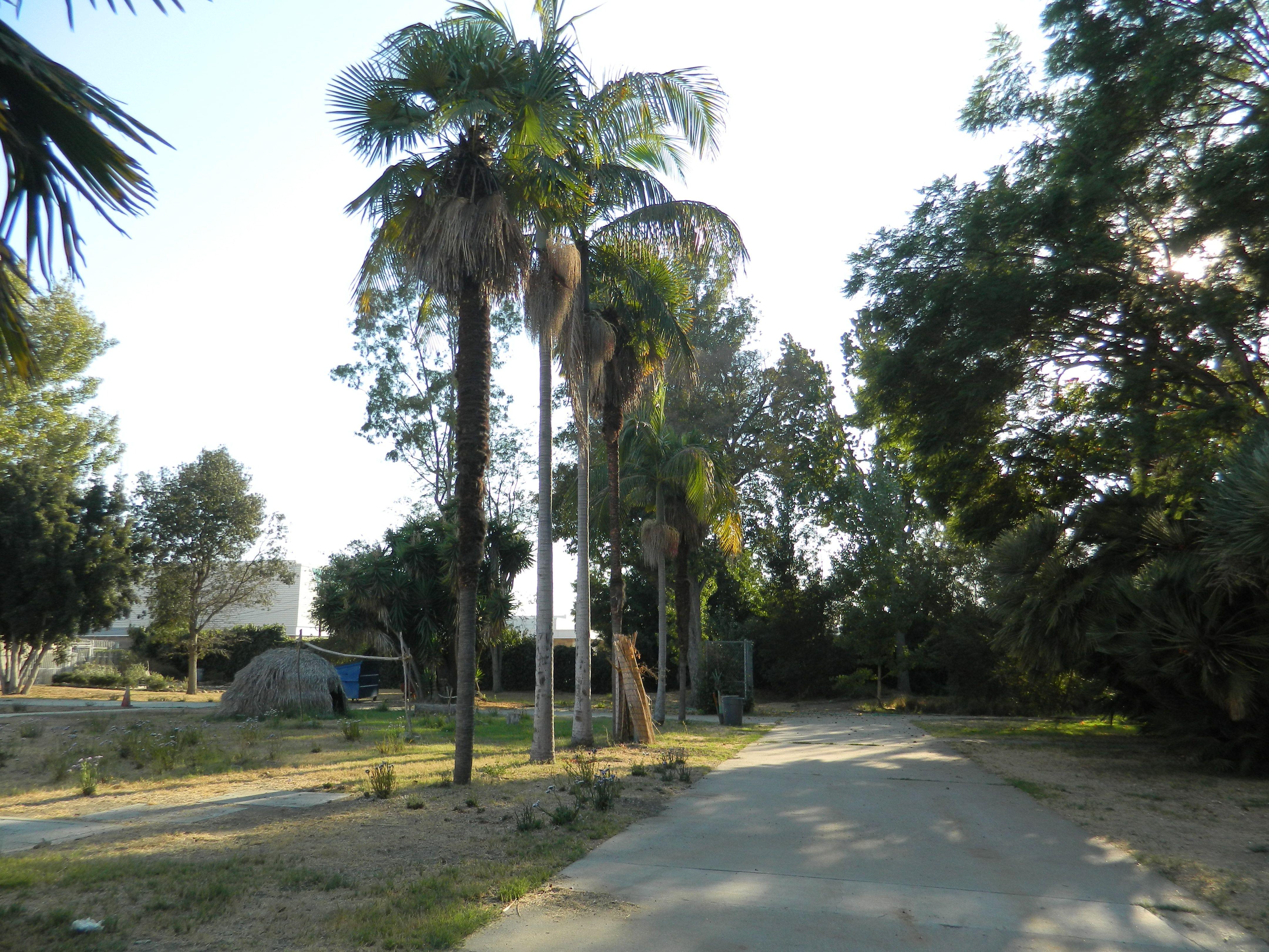 Historic landmark at University High School, Los Angeles, California, United States; featuring Chumash-style 'Ap hut