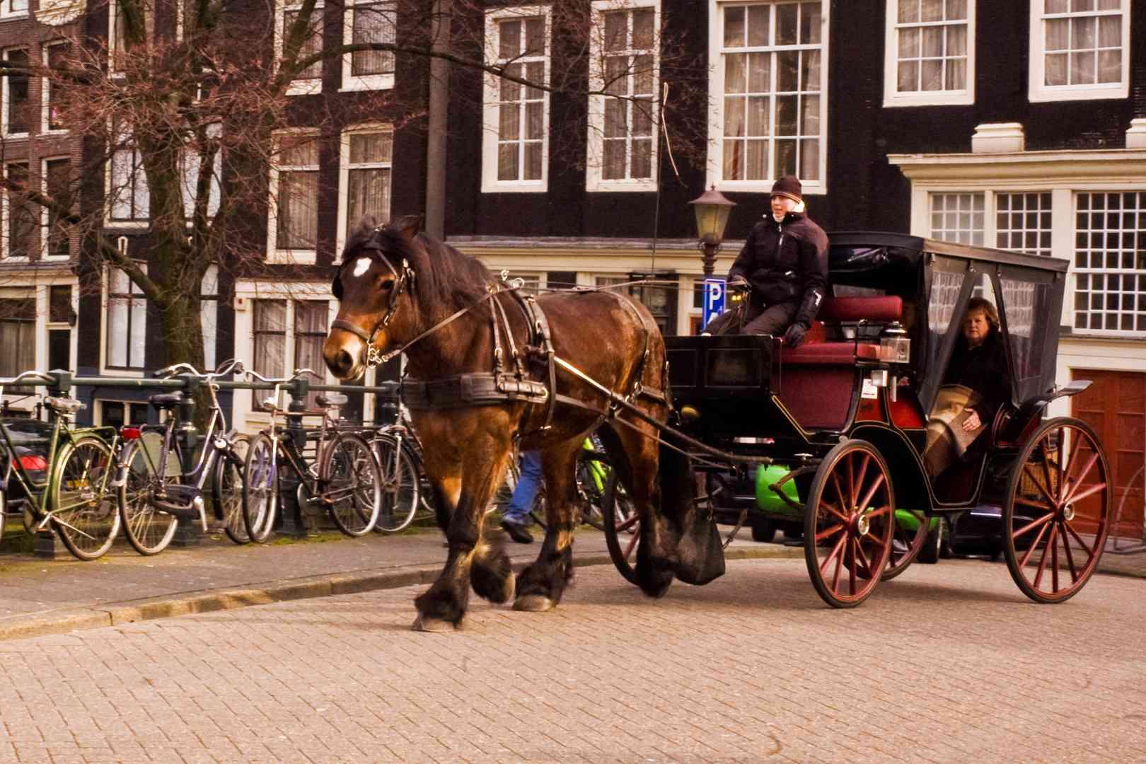 carruaje tirado por caballos Amsterdam