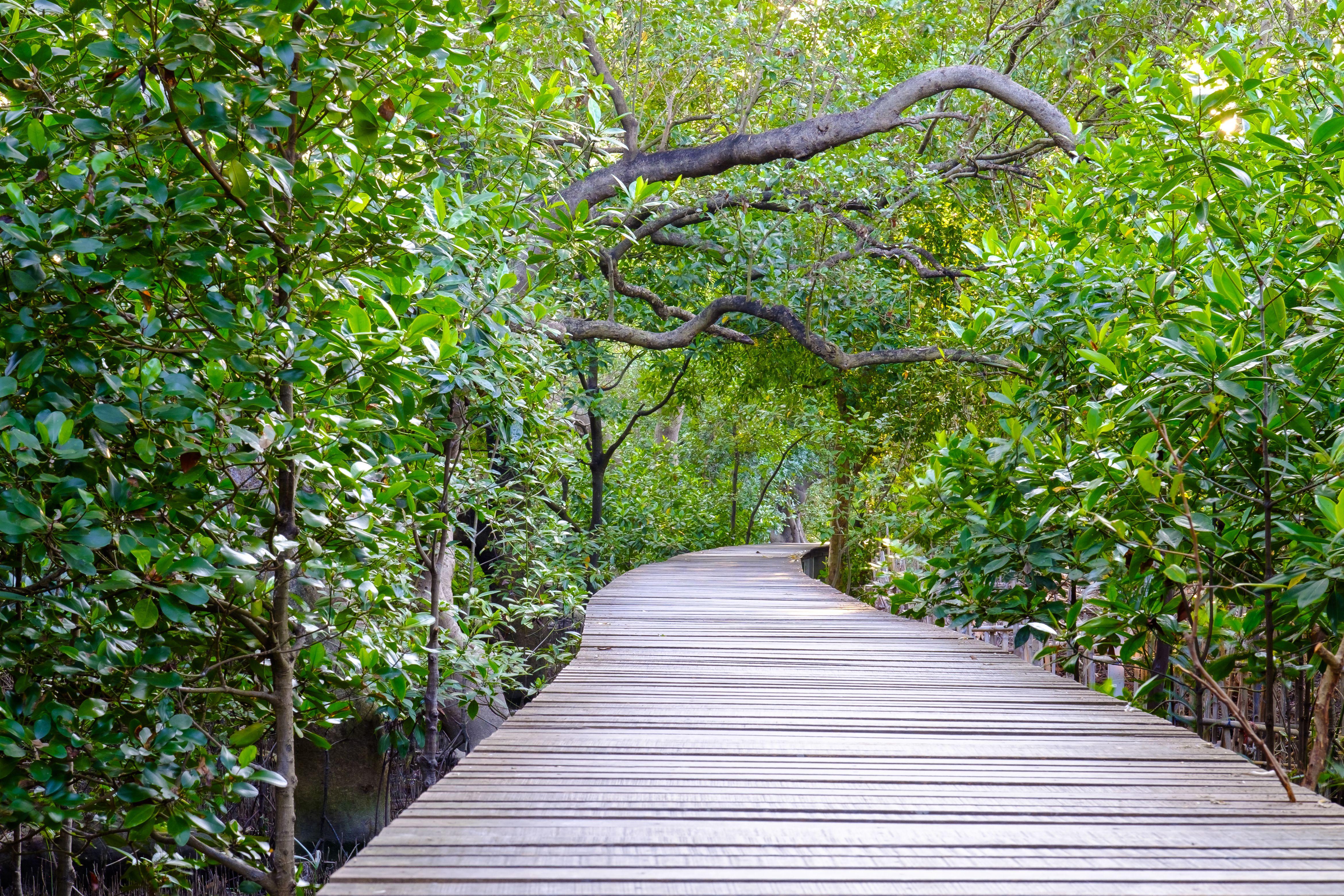 A walkway through mangroves in Rayong, Thailand