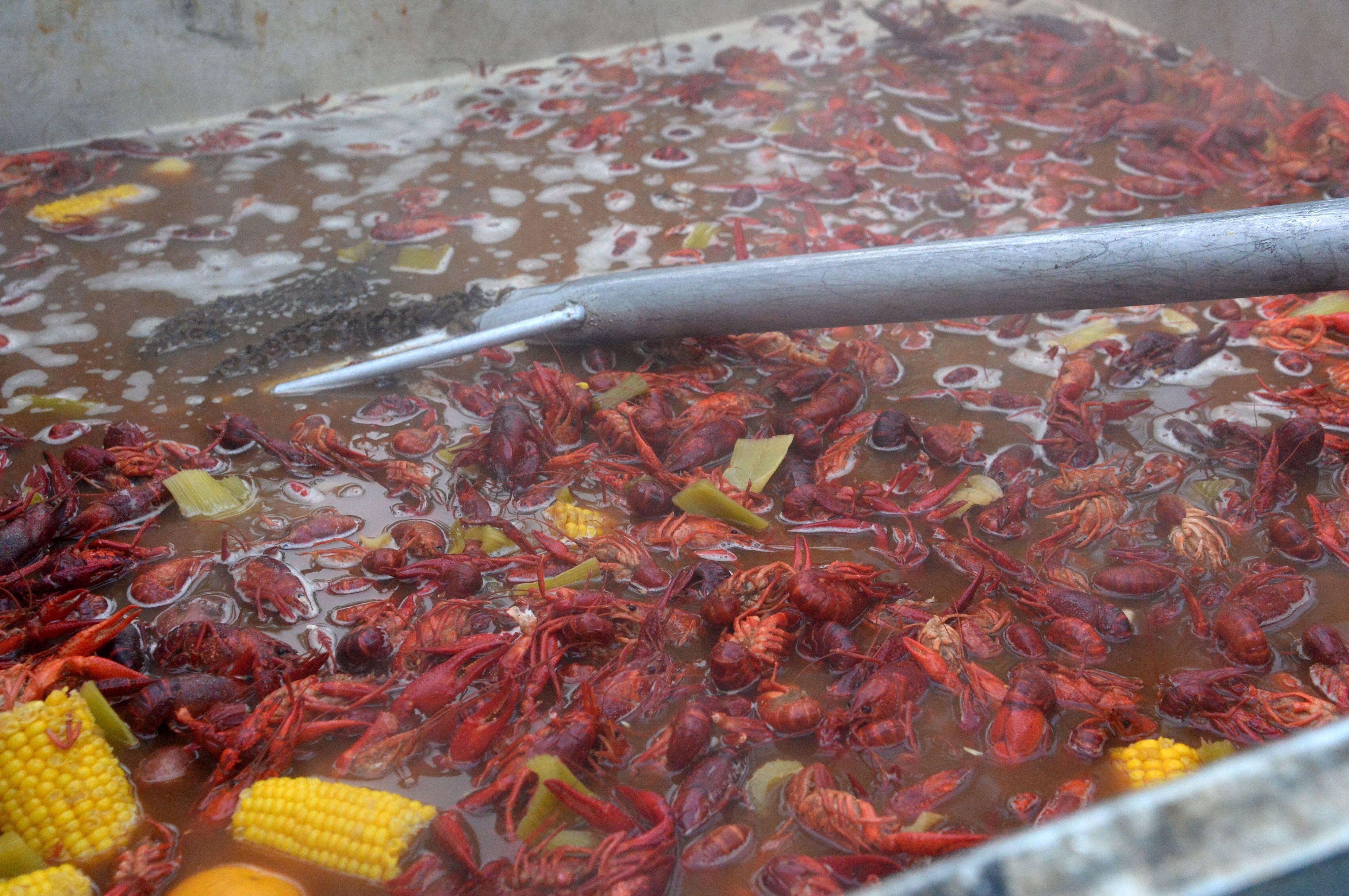 Crawfish boils are popular on the Gulf Coast.