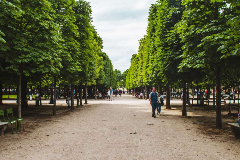 Tree lined walking paths in Jardin des Tuileries