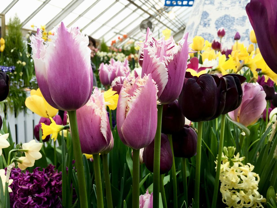 Smith College Bulb Show - March Event in New England