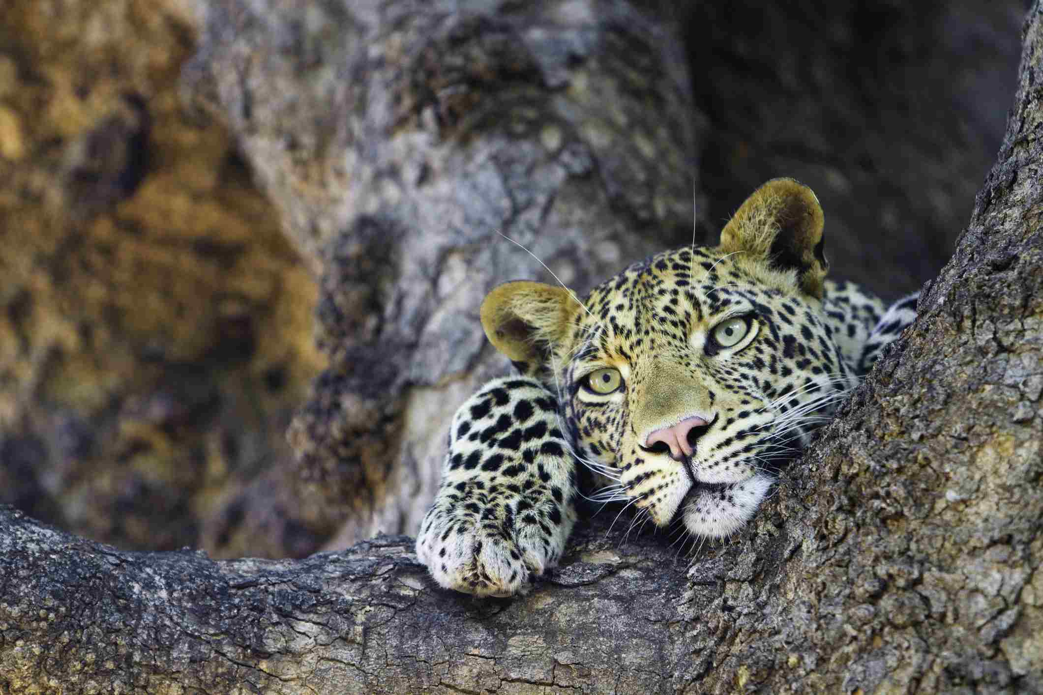 10 of the Best Places to Visit in Botswana