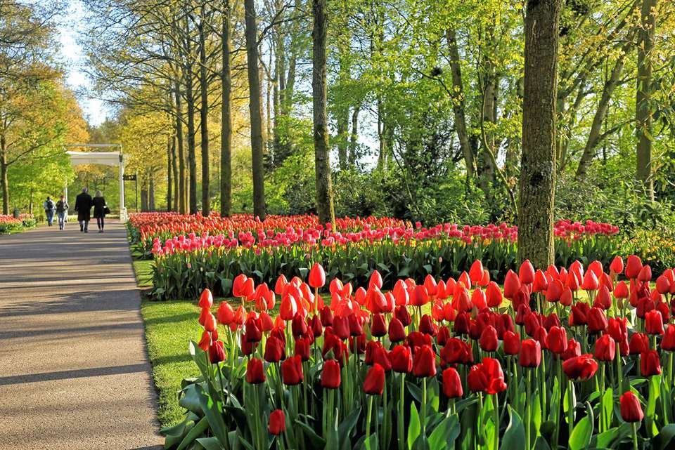 Guide to seeing the tulips near amsterdam keukenhof gardens lisse netherlands mightylinksfo