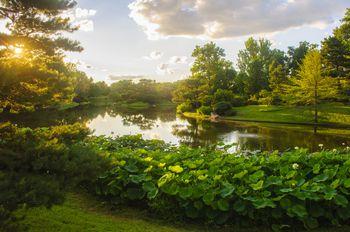 japanese garden at missouri botanical garden - Botanical Garden St Louis