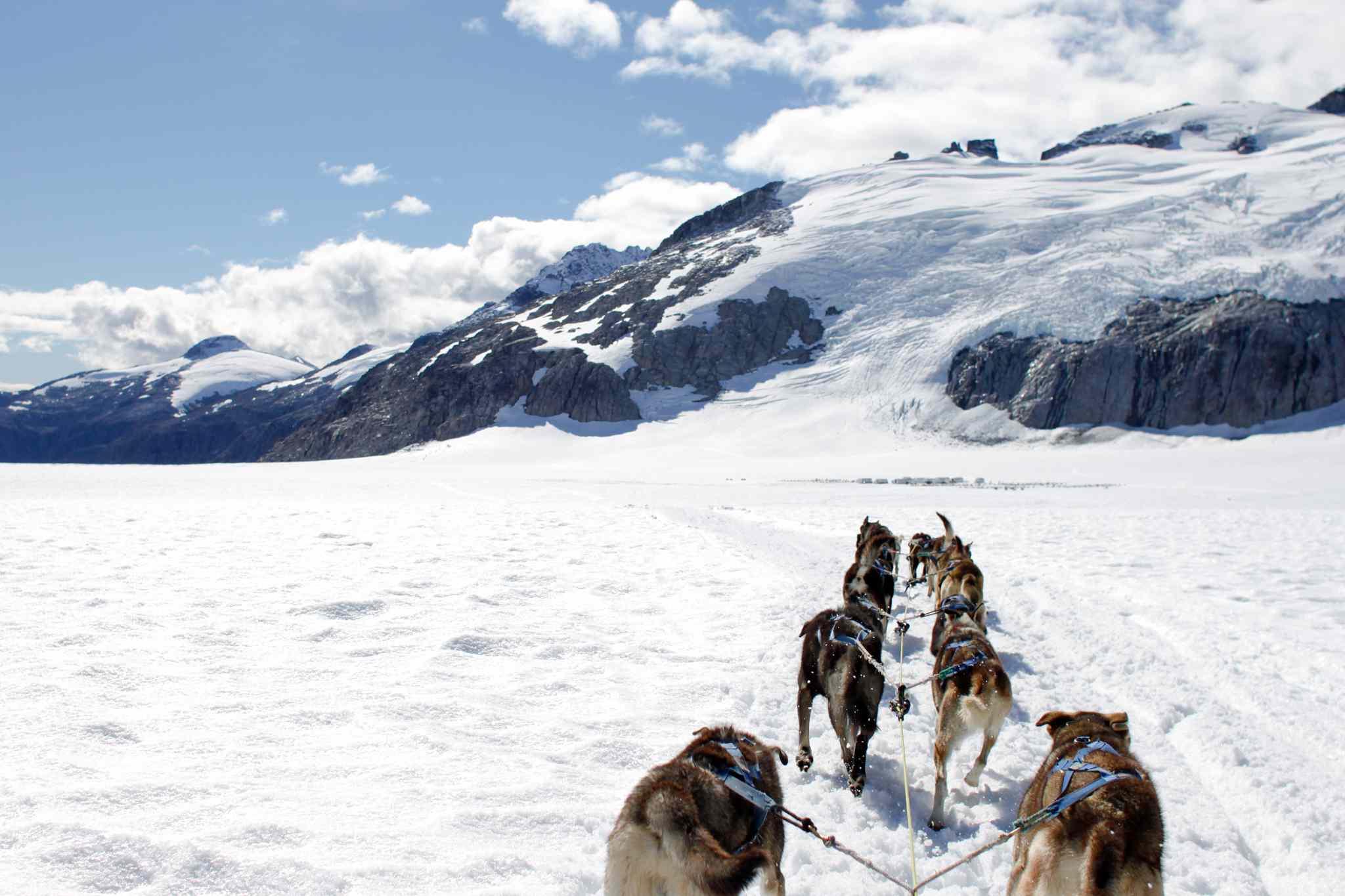 Trineo de perros en un campo nevado contra el cielo en el Parque Nacional Glacier Bay