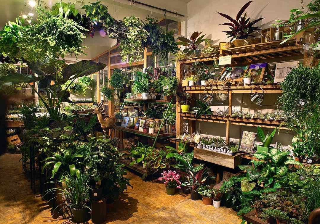 Plants in Paxton Gate store