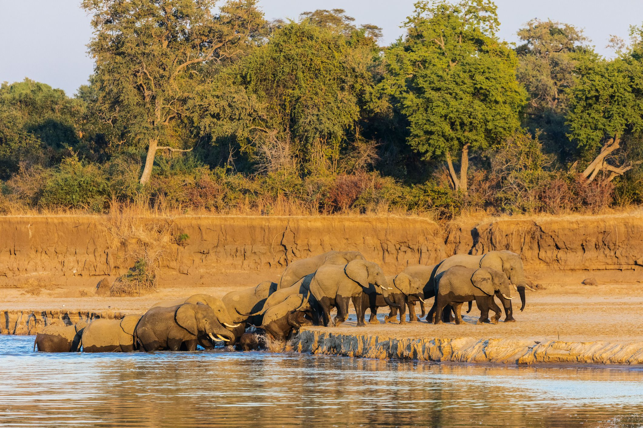 Great Lakes Auto >> South Luangwa National Park, Zambia: The Complete Guide