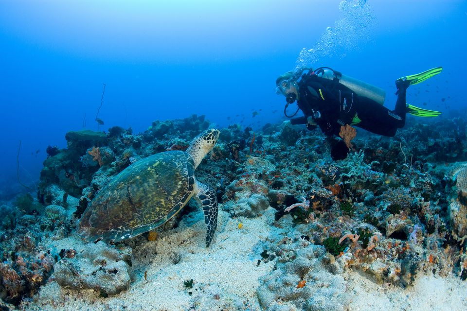 5 Of The Worlds Cheapest Places To Get Scuba Certified