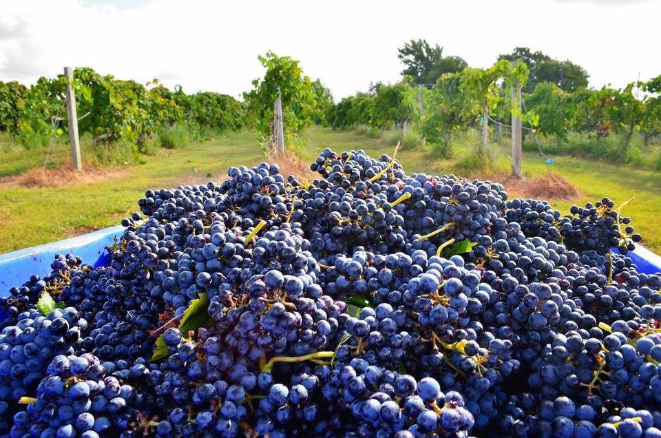 7 Great Wineries And Vineyards Near Houston