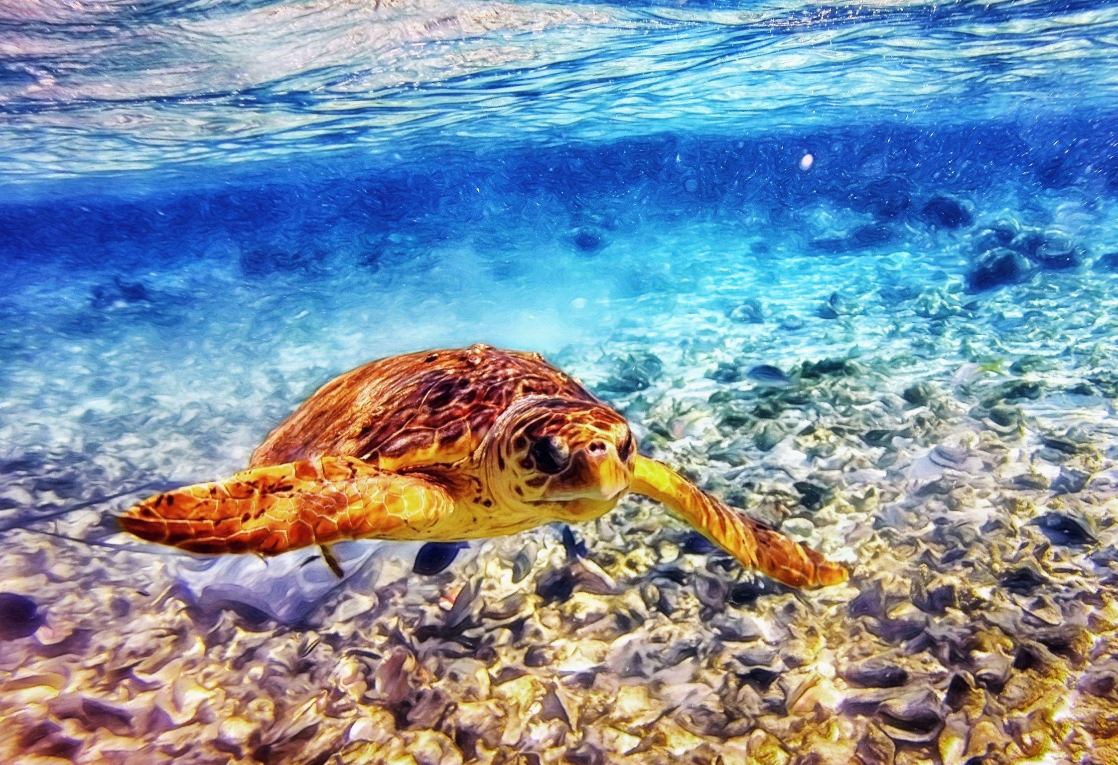 Sea turtle swimming in conch graveyard