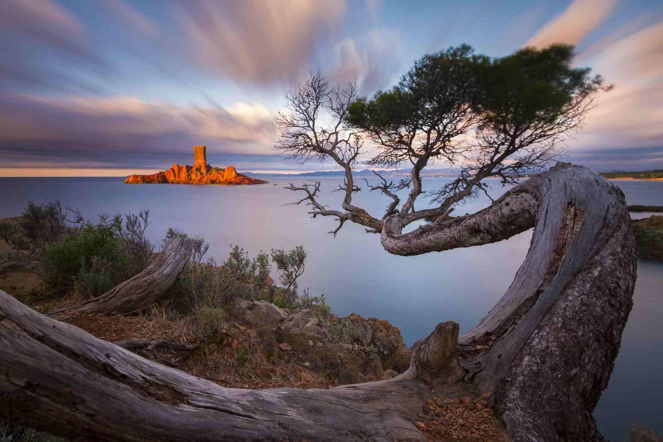 France, Var, Corniche de l'Esterel, Saint Raphael, tortuous pine tree of the Cap du Dramont in front of the Ile d'Or