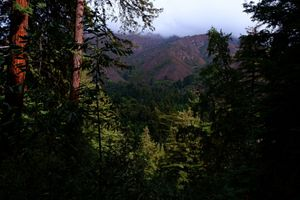 Redwood forest along a trail in Big Sur, California