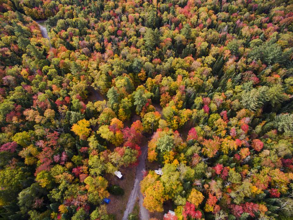 Aerial of colorful Autumn trees in the Adirondacks New York