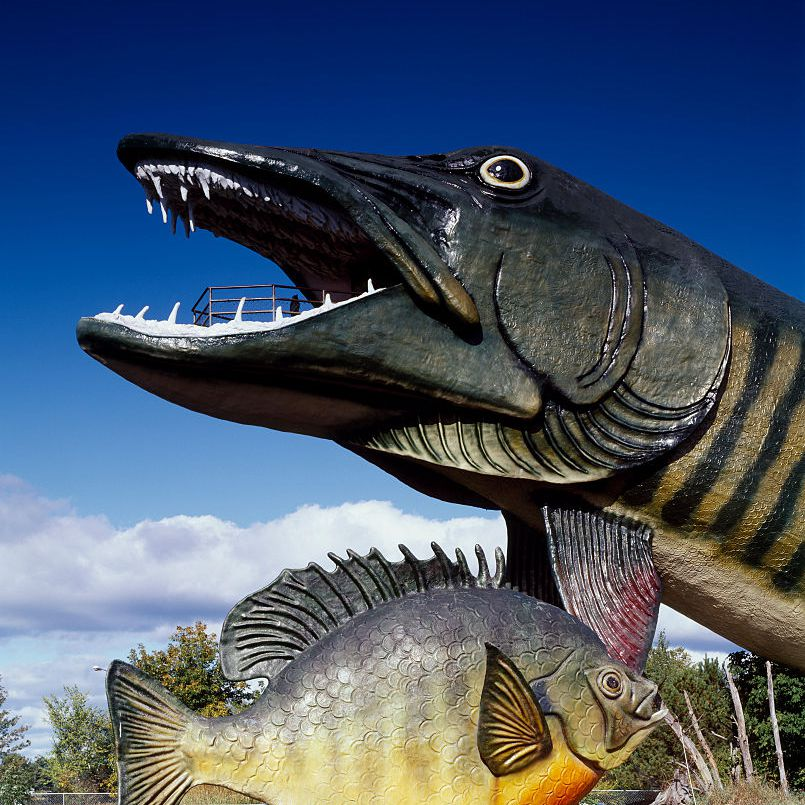 Mammoth Muskie at the Fishing Hall of Fame in Hayward, Wisconsin