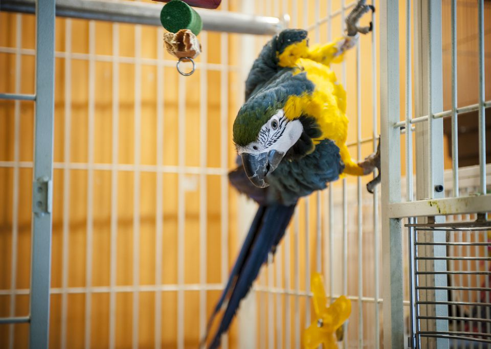 Pet Birds and Air Travel: What You Need to Know
