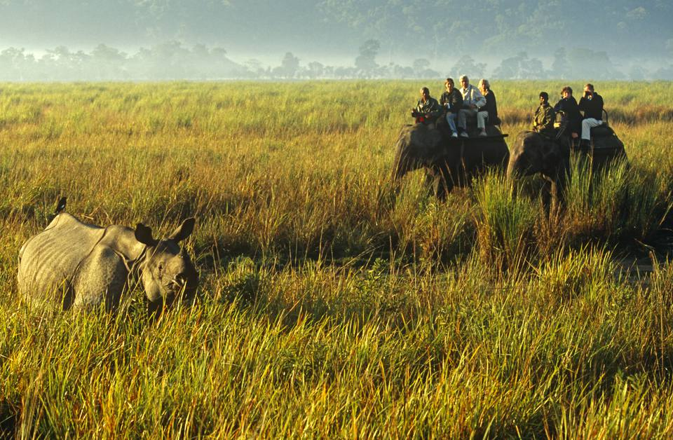 Kaziranga National Park, Assam.