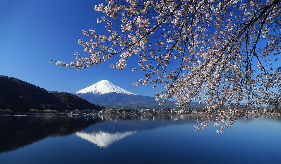 Mount Fuji with Cherry Blossoms