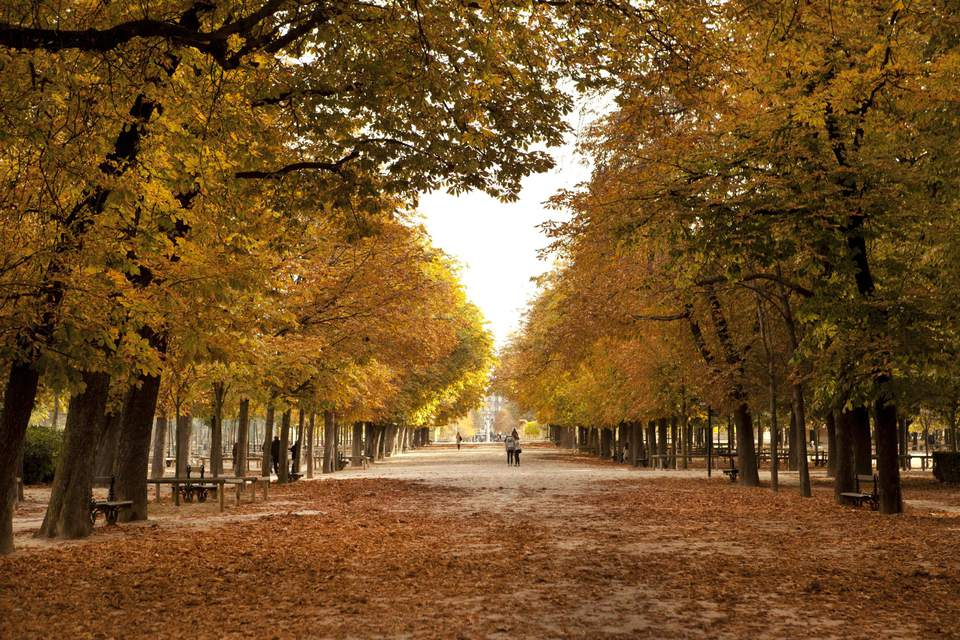 Paris in November can be incredibly tranquil.