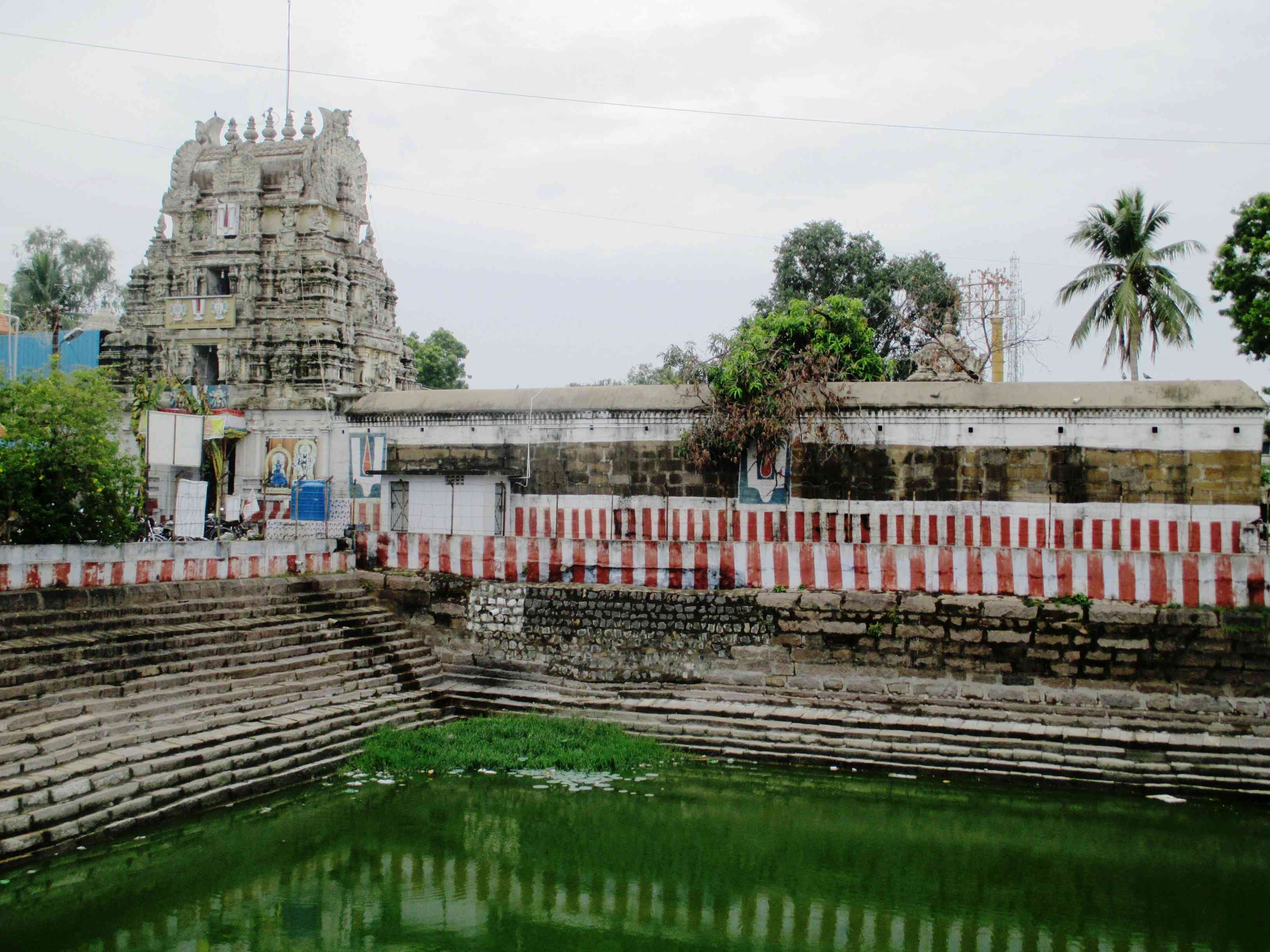 Green pool of water with stone steps and white temple in the background, Kanchipuram, Tamil Nadu, India