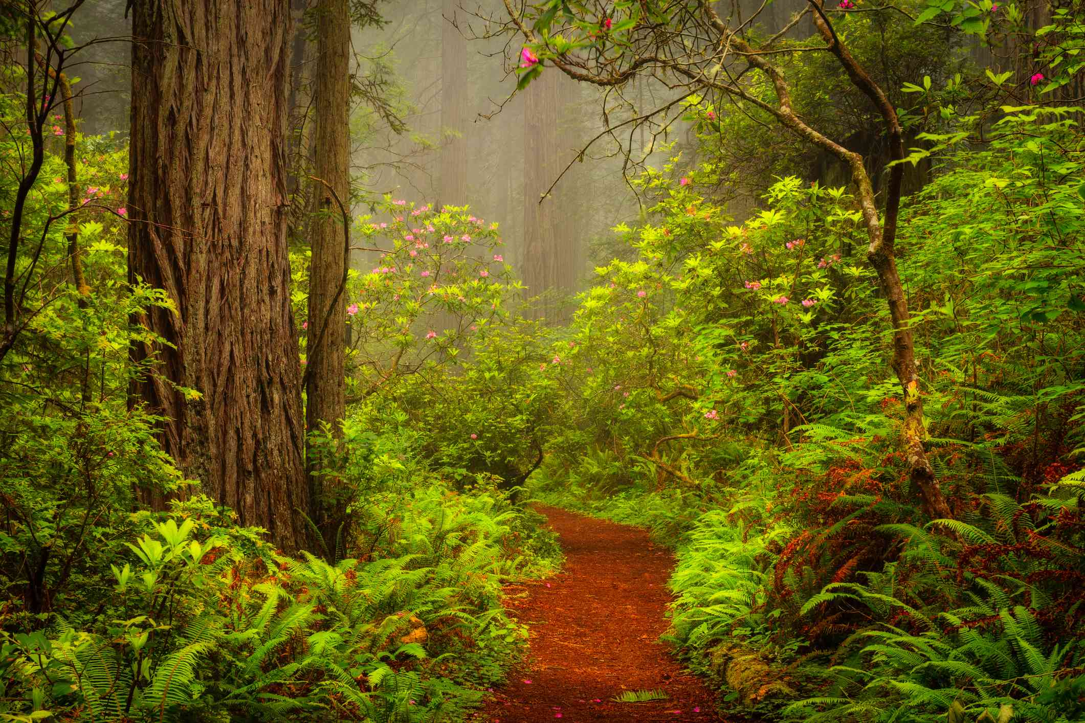 The Damnation Creek Trail in Del Norte Coast Redwoods State Park, California