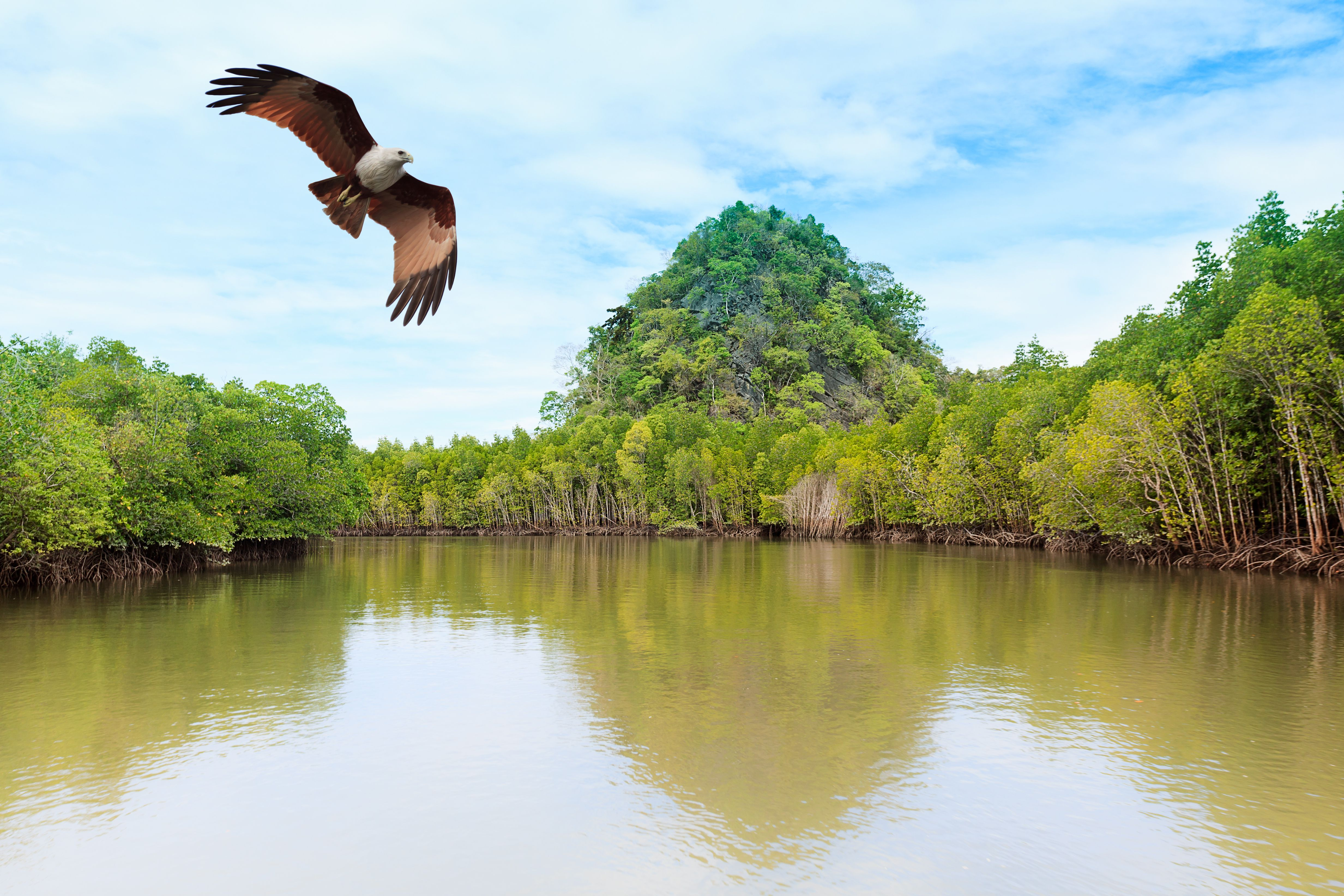 mangroves in Langkawi, Malaysia