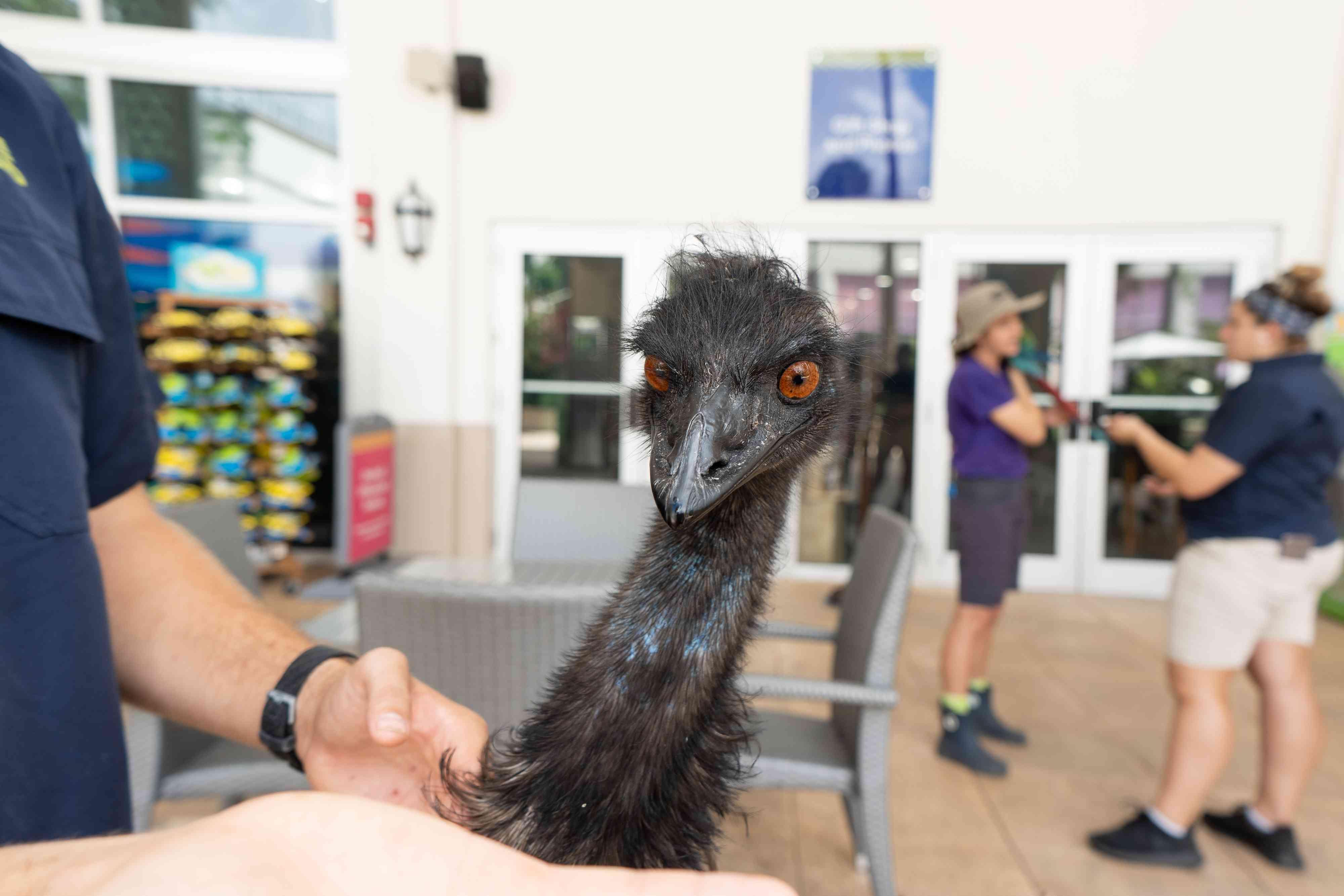 Emu at Jungle Island