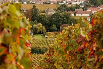 Gevrey-Chambertin Vineyard in autumn