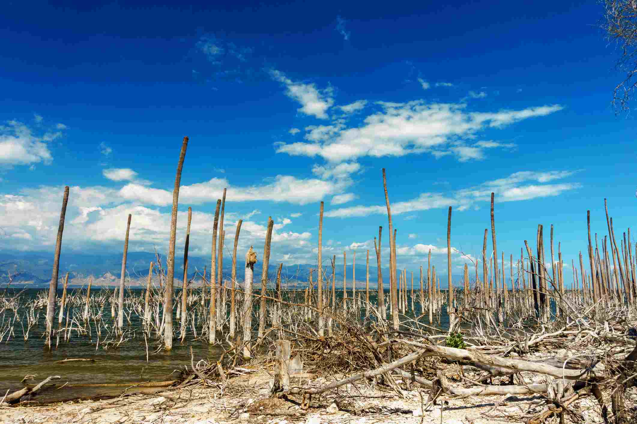 salt lake, the trunks of the trees without leaves in the water, Lake Enriquillo