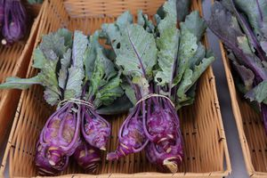 Kohlrabi harvested at a garden and served at a farmers market
