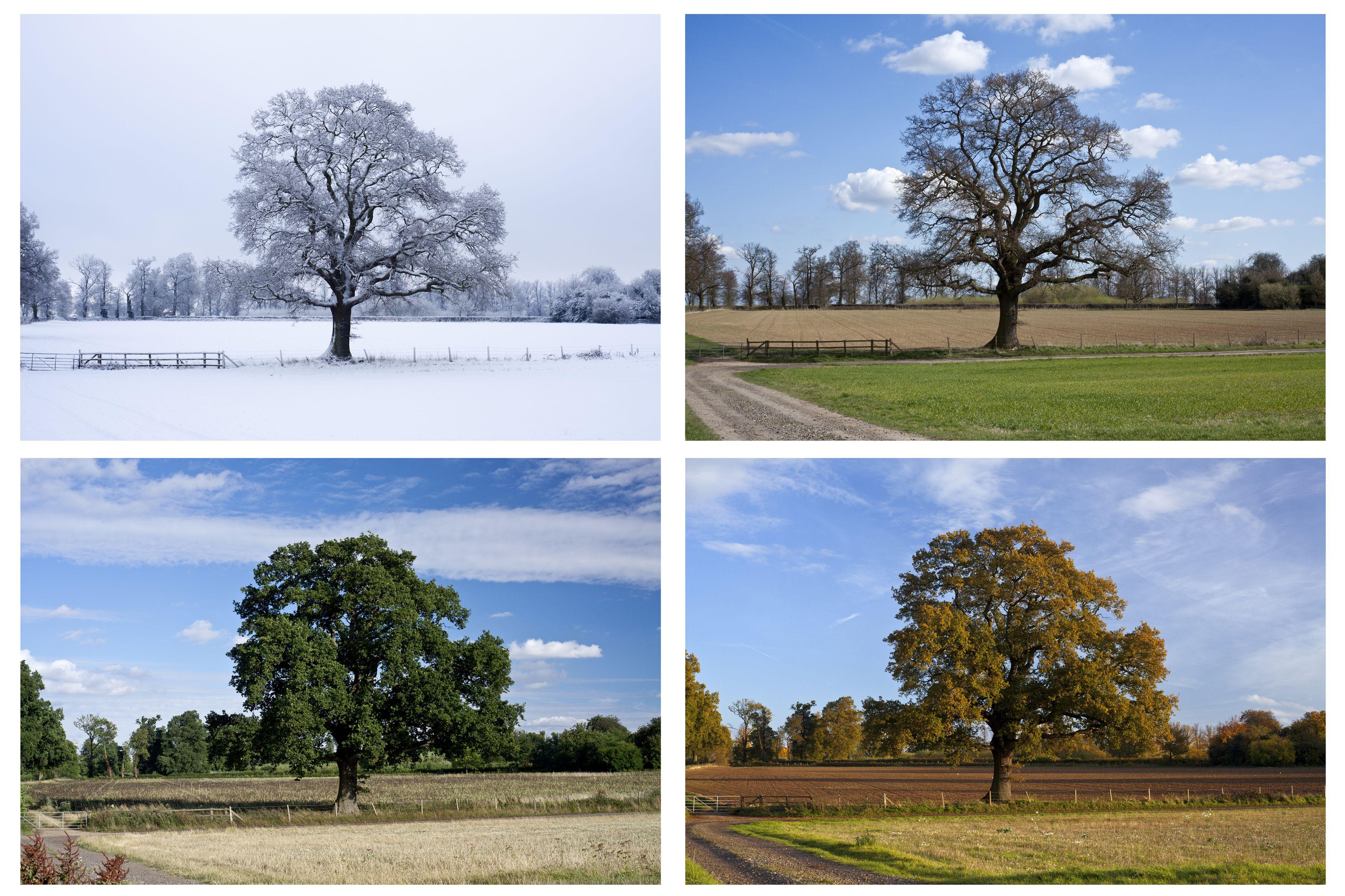 Four seasons in Canada