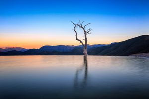 Landscape with bare tree in water at sunset, Hierve El Agua, Oaxaca, Mexico