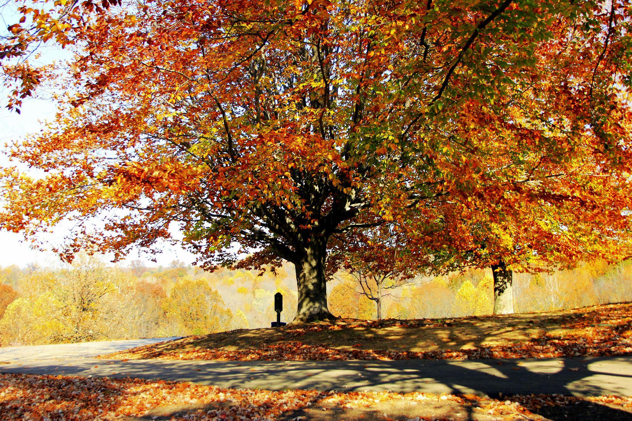 Autumn In Cherokee Park, Louisville