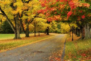 Rural Connecticut road covered by autumn leaves