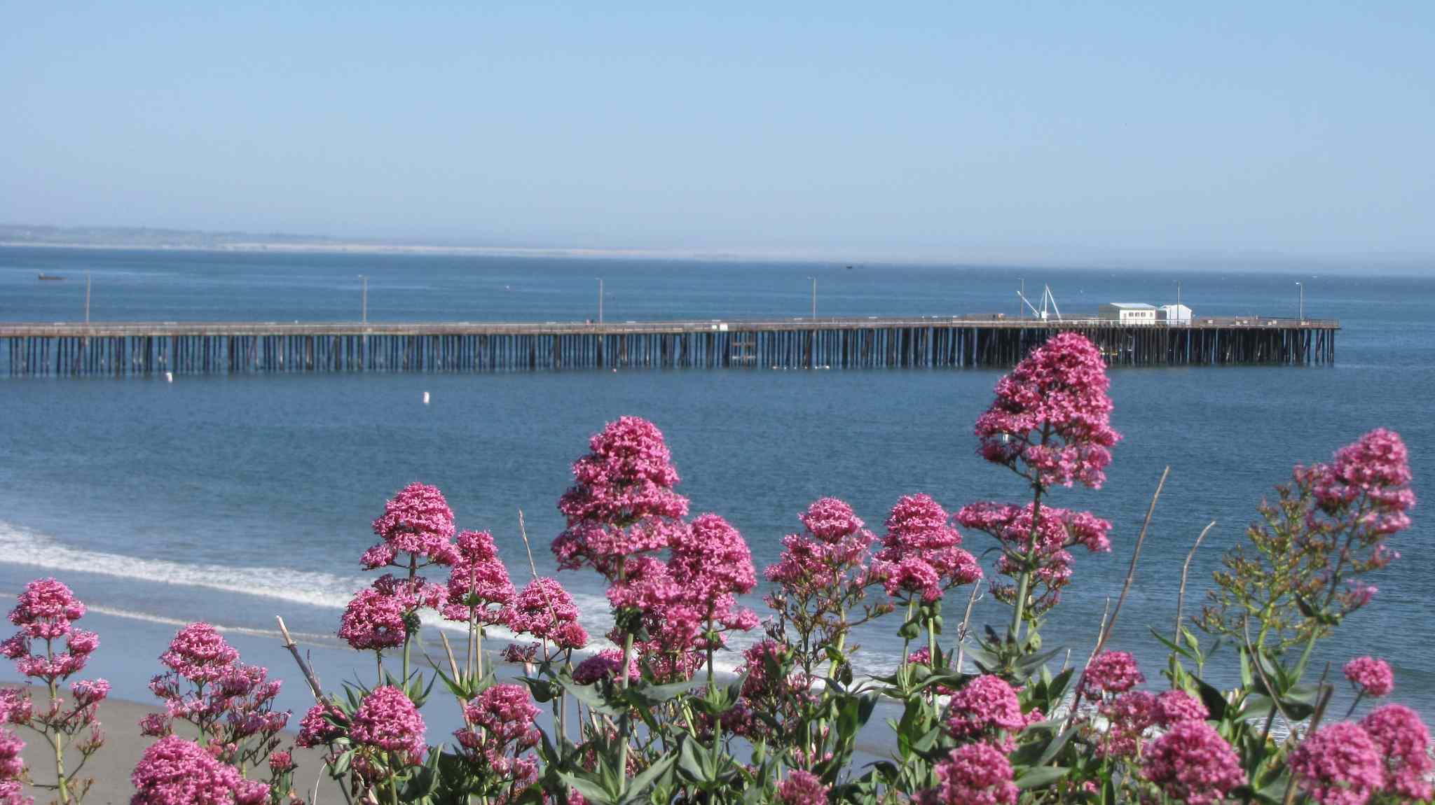 The Avila Beach Pier
