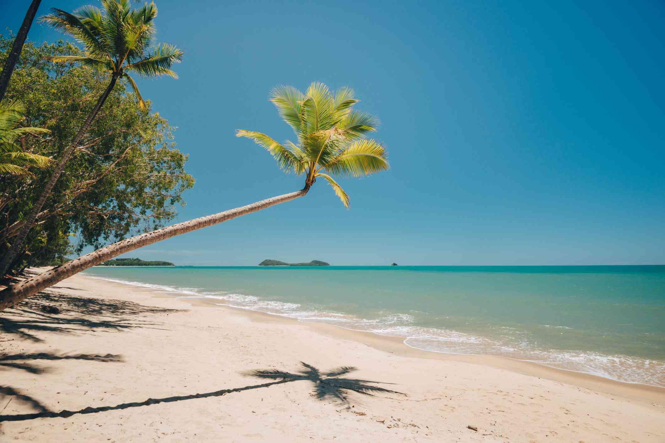 Palm tree at Clifton Beach