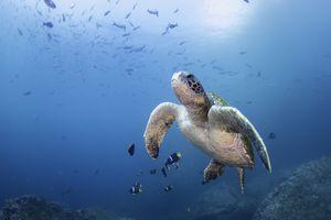 Galapagos Islands sea life