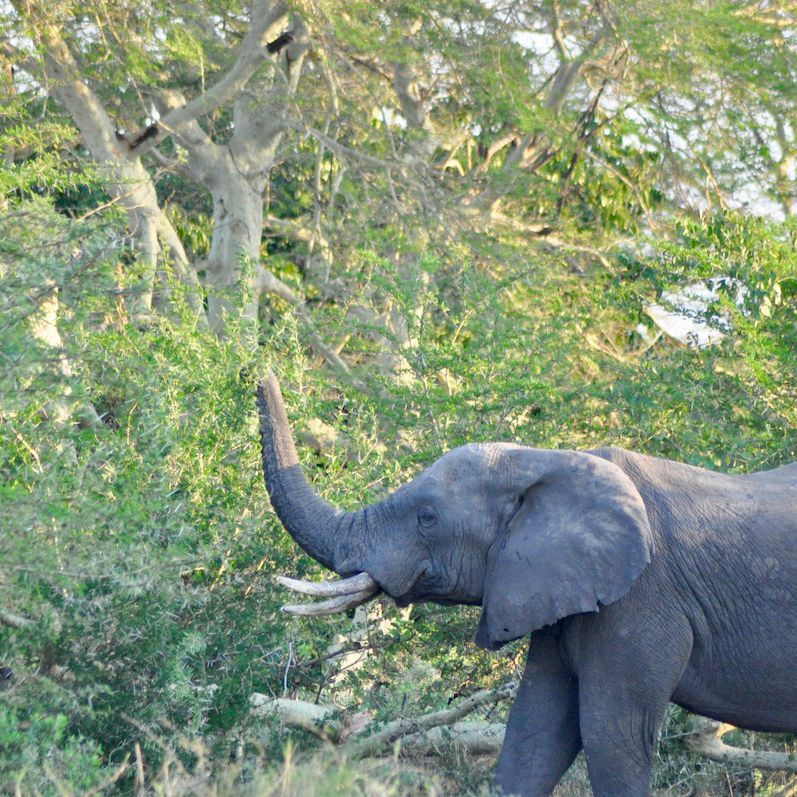 The 8 Most Adventurous Things to Do in Malawi