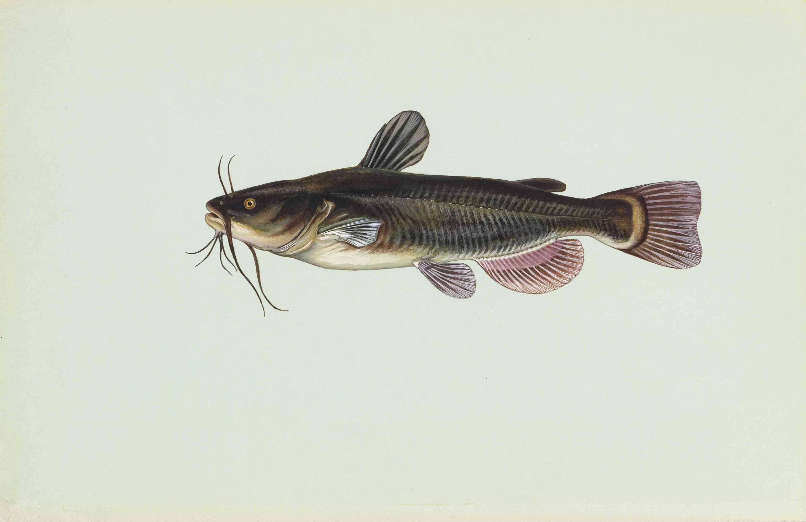Fish Species of Lake Norman in North Carolina