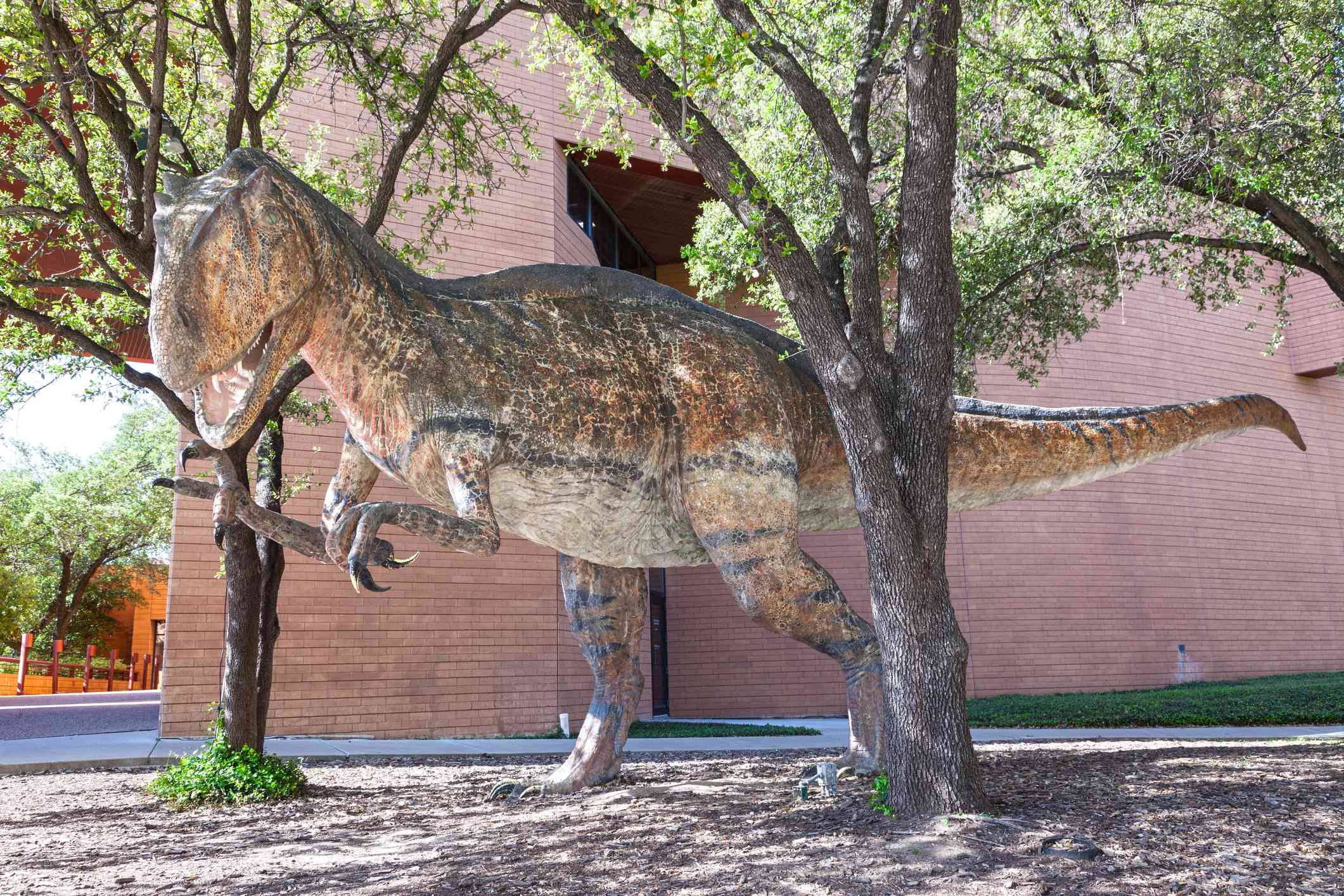 Dinosaur at the Science and History Museum of Fort Worth