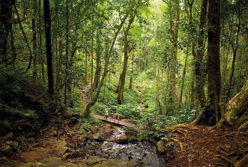 Parque Nacional Montañas Bunya
