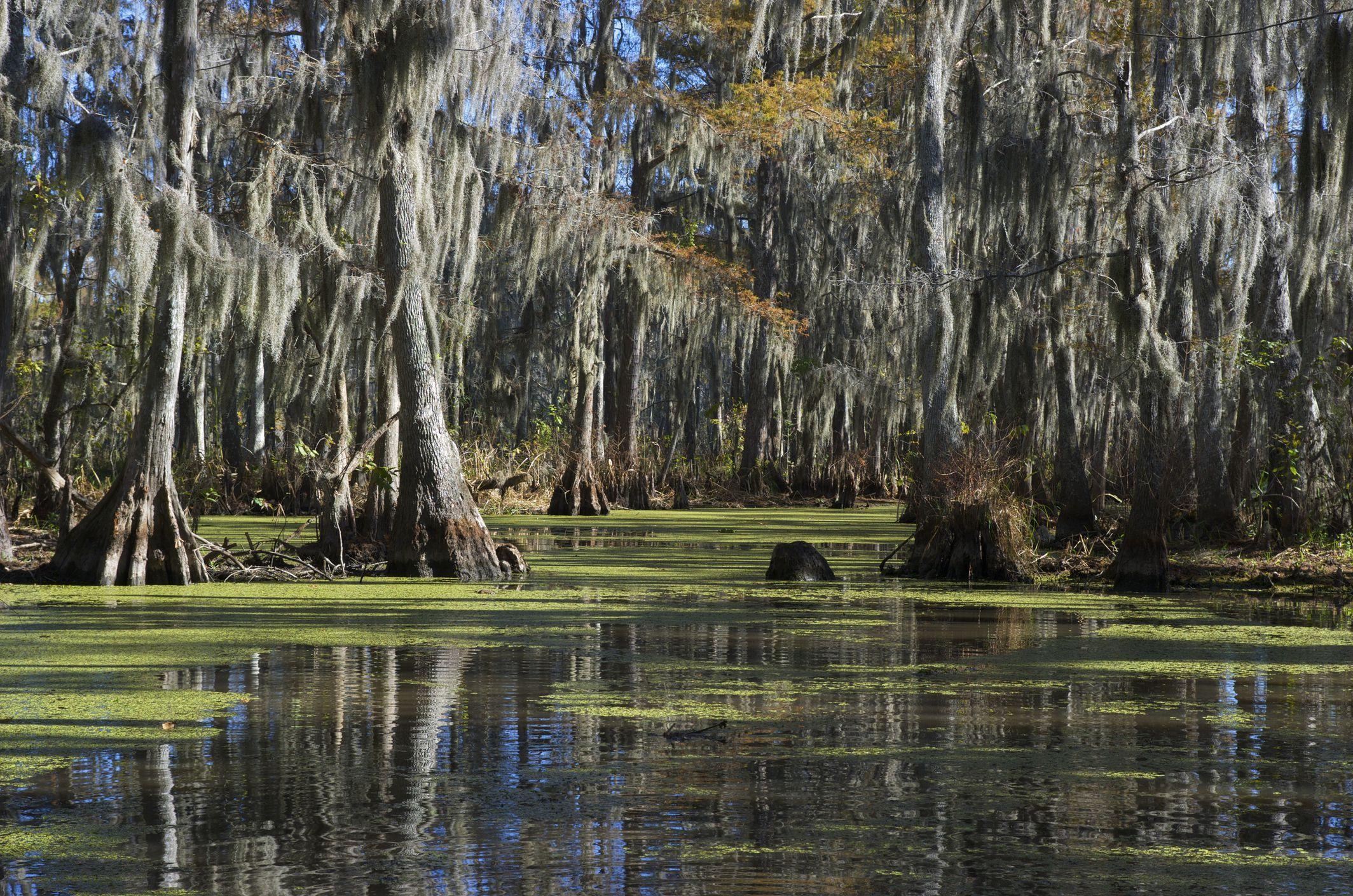 A swamp in Louisiana