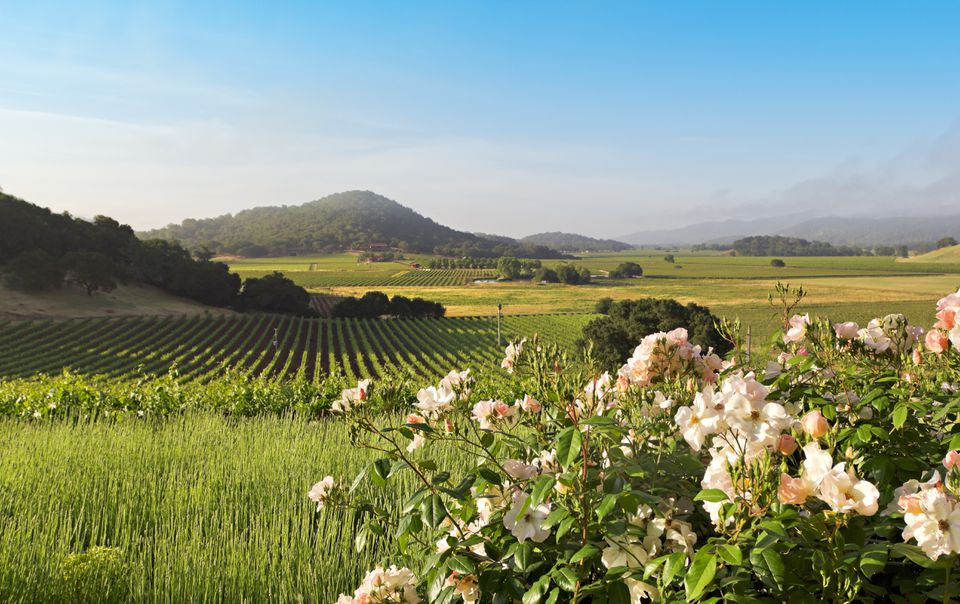 Napa Valley landscape in spring