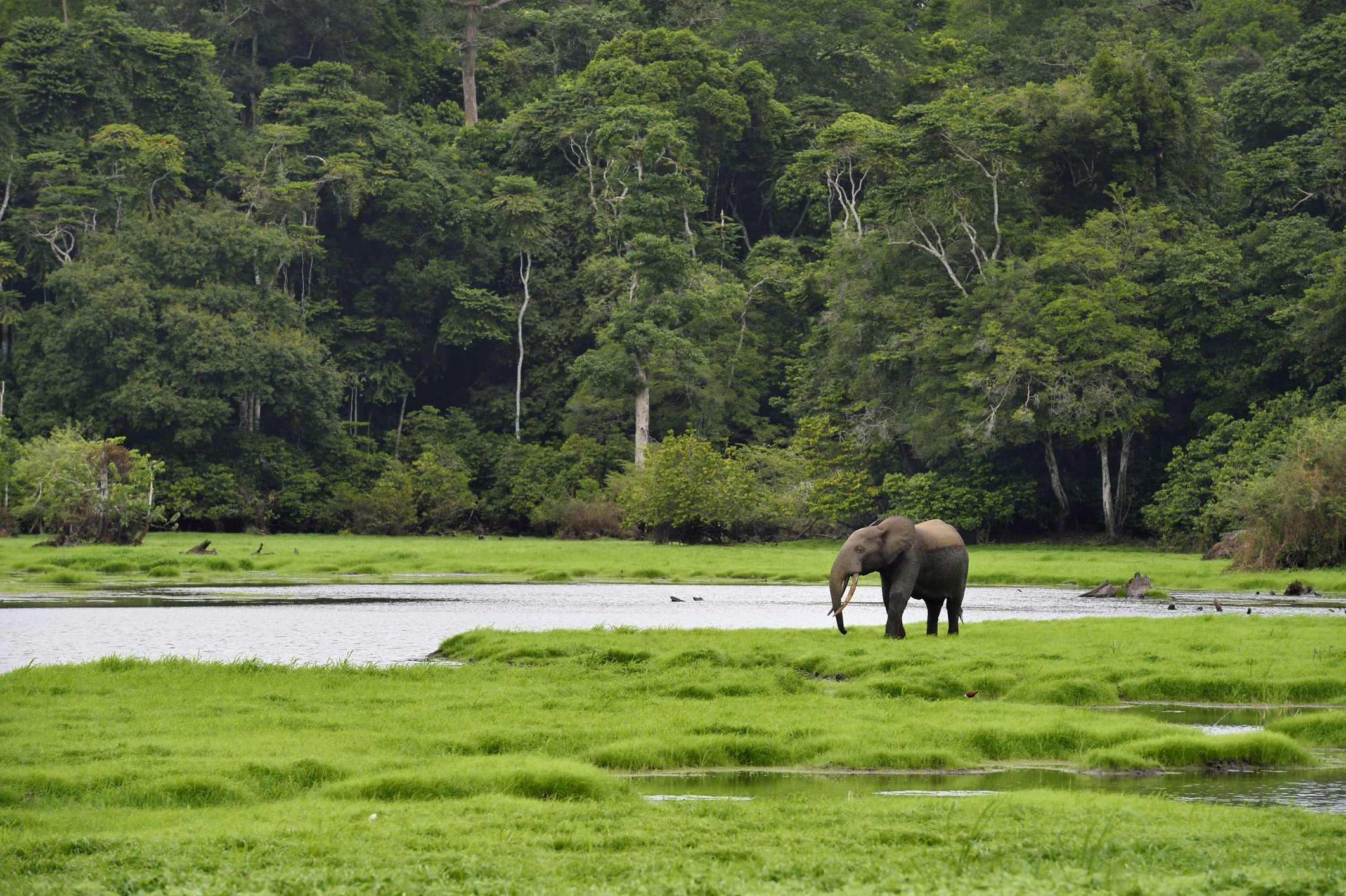 Gabon Travel Guide: Essential Facts and Information