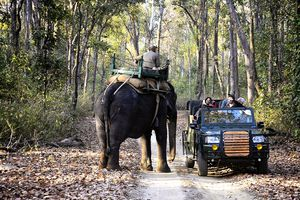 Safari in Kanha National Park.