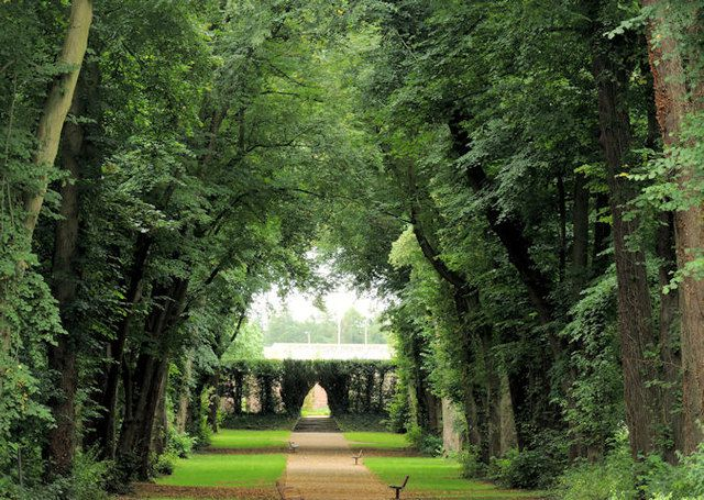Row of trees separated by a dirt path in the Antrim Castle Gardens