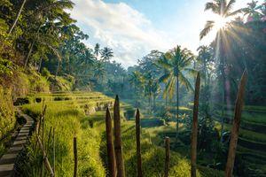 Tegallagan rice terraces, Bali, Indonesia